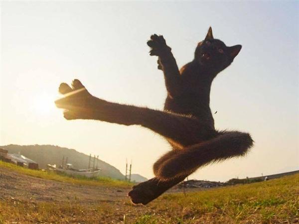 mơ-thấy-mèo-đen