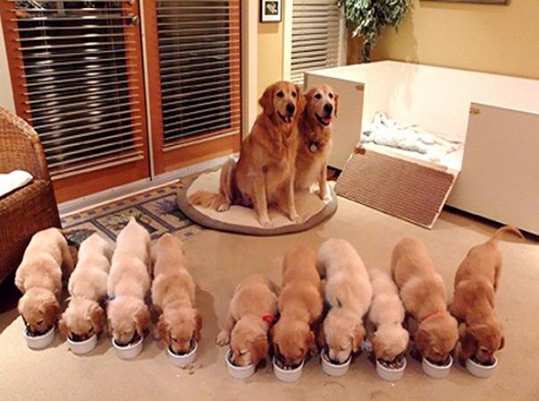 Mơ thấy chó đẻ có nhiều con đực là điềm báo may mắn
