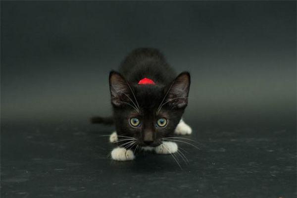 Mơ thấy mèo đen là điềm gì?