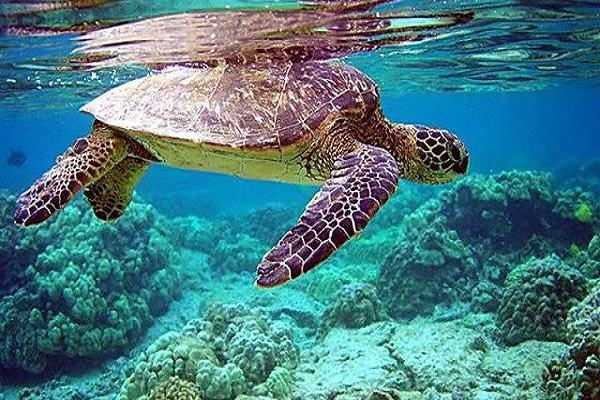 Mơ thấy Rùa Biển là điềm báo gì?