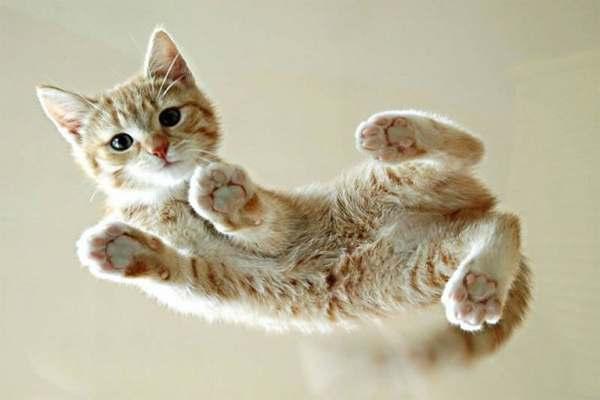 Mơ thấy mèo cắn đánh con gì ?