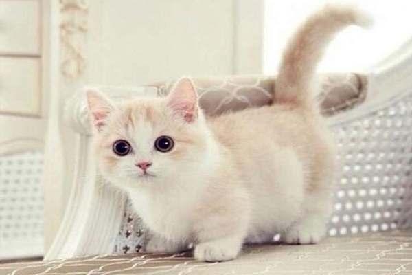 Mơ thấy mèo trắng cắn là điềm gì ?
