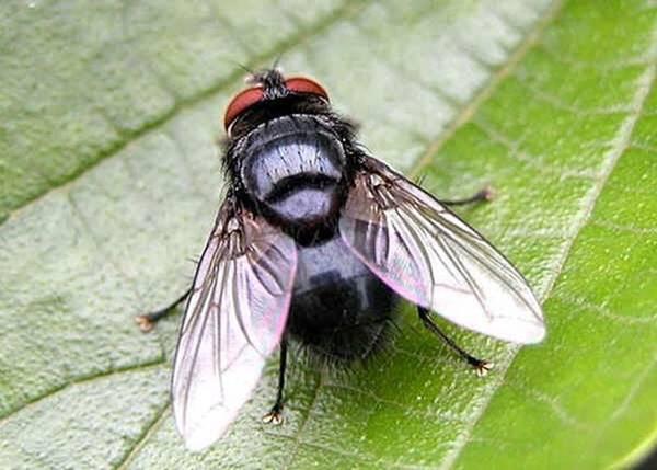 Nằm mơ thấy con ruồi đánh con gì đánh lô đề số mấy