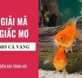 Mơ thấy cá vàng điềm báo lành hay dữ?